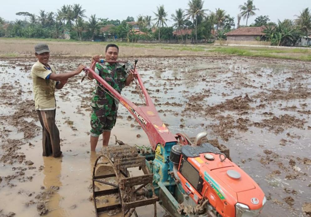 Bantu Petani, Babinsa Kresek Gunakan Traktor