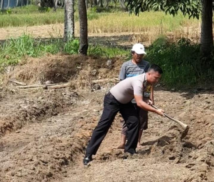 Bripka Didi Hartady Membantu Petani Cabai Bekerja Diladang