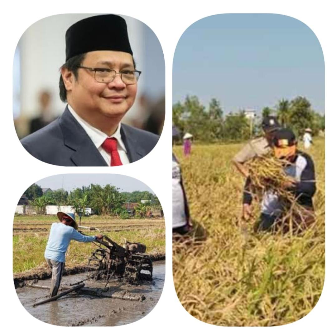 Pemerintah Berencana Membuka Lahan Sawah Baru di Kalimantan Tengah.