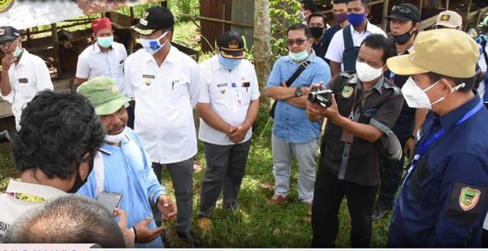 Bupati Barito Utara Tinjau Peternakan Sapi Potong Kelompok Ternak Maju Bersama Transbangdep.