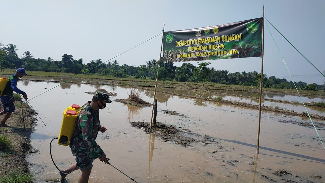 Koramil 0227 Cipocok Jaya Dan Kodim 0602/Serang, Uji Coba Bios-44 Dilahan 4 Hektar